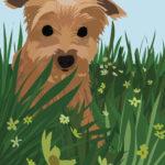 Yorkie in Flower Field Illustration