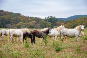 Missouri Wild Horses
