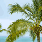 Palm Tree Tropical Illustration