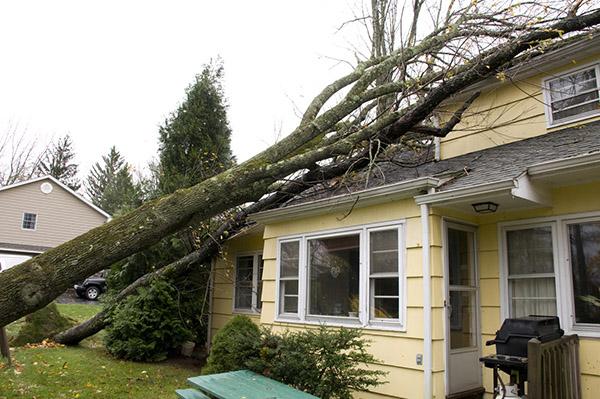 Tree damage on roof / house
