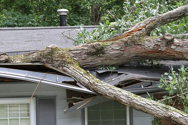 Storm damage from a tree falling on roof