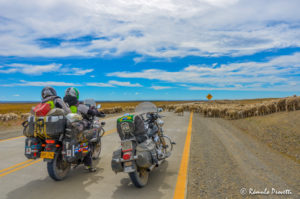 Ovelhas e as motos - Ruta 257, Tierra del Fuego, Chile