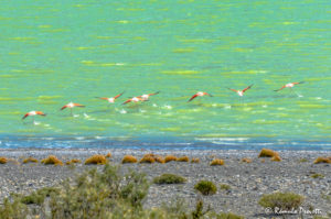 Flamingos - Parque Nacional Torres del Paine, Chile