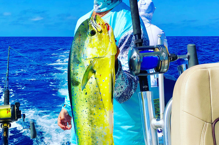 green and yellow fish caught on a fishing charter