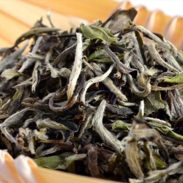 high quality white tea