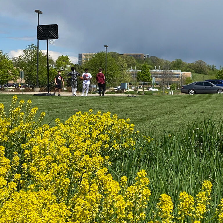 Students outside the building playing basketball, with yellow flowers in the foreground.