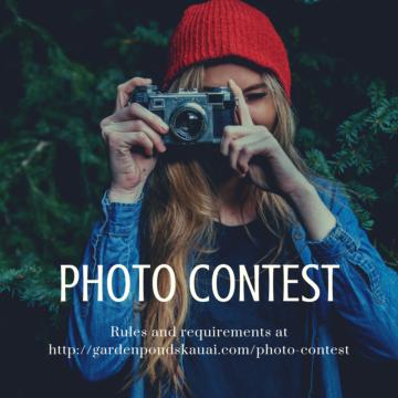 Photo Contest best photo of Garden Ponds