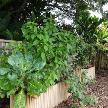 Tammy's tips for tropical home gardens