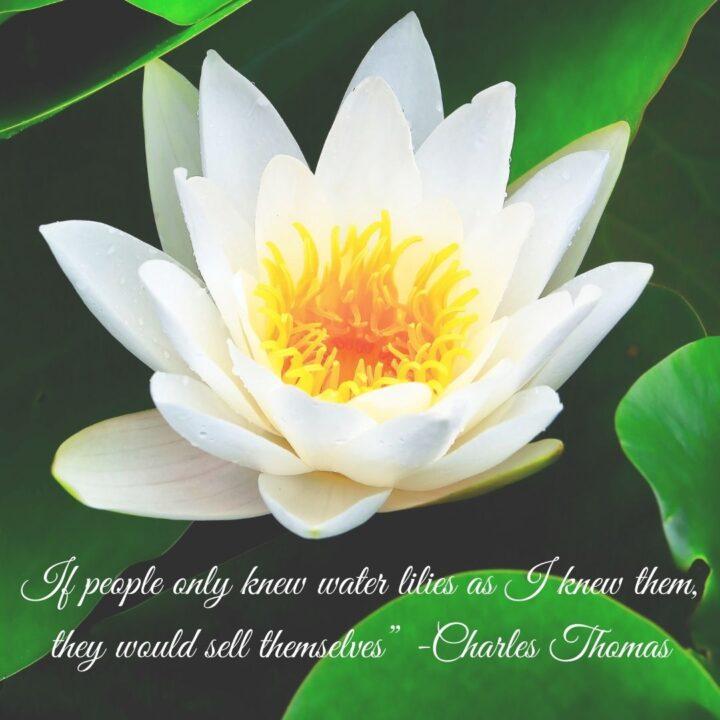 Remembering Charles Thomas