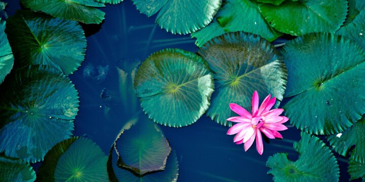 Turn Your Attention to the Present Moment: With Water Gardening