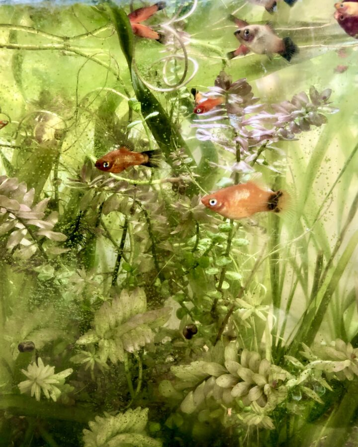 Under The Surface: What Draws Us To The Underwater World of Aquascapes?