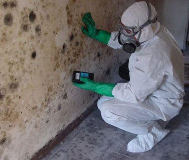 Salt Lake City, Utah Mold Damage Cleanup Crew