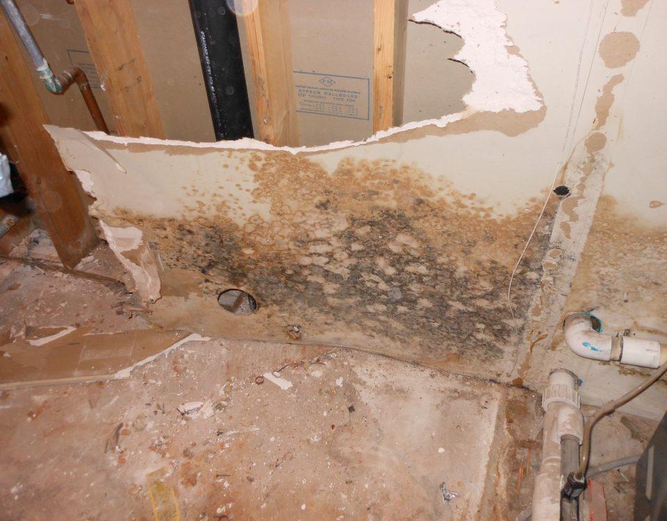 mold restoration
