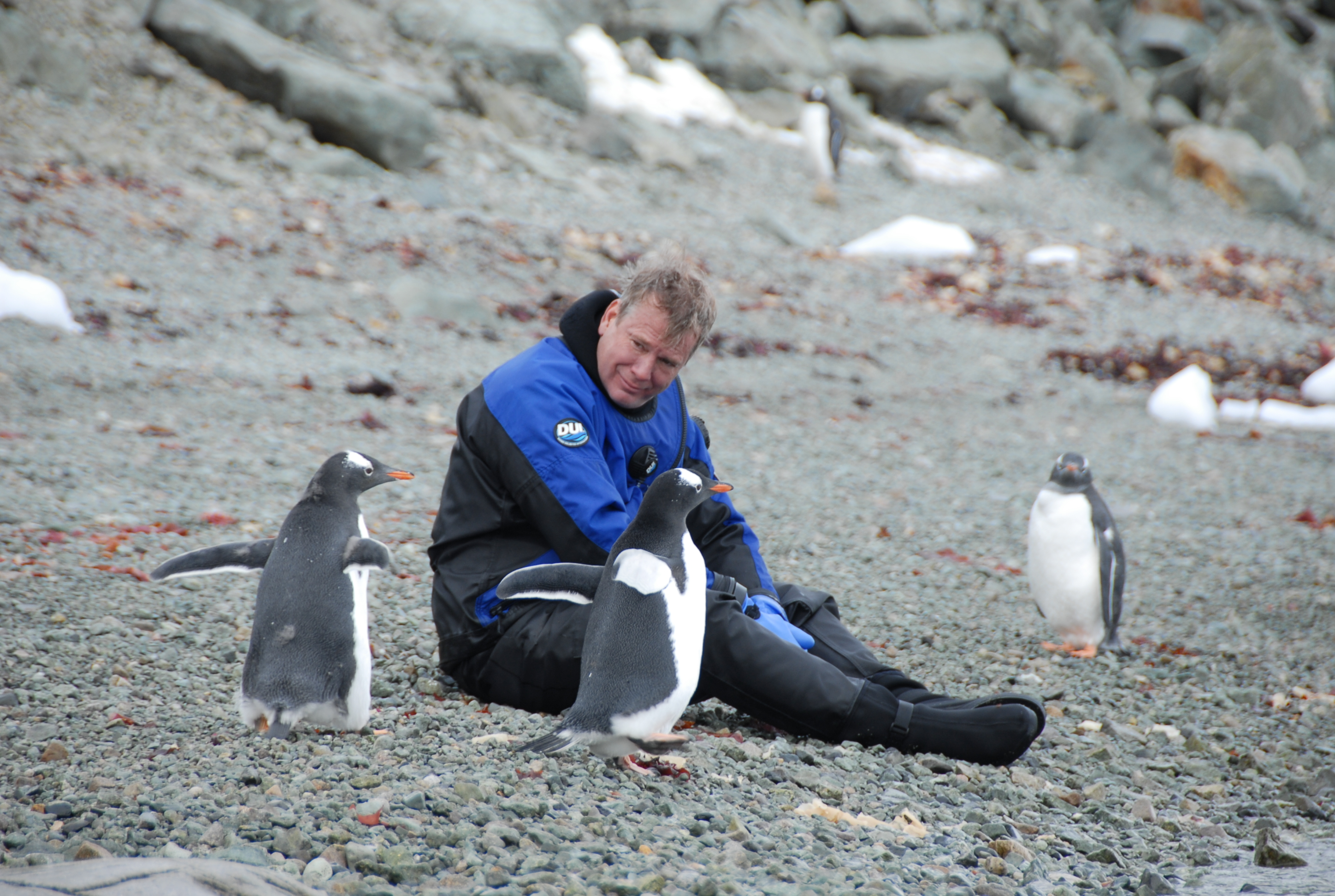 Antarctica - Diver in a drysuit surrounded by penguins on land
