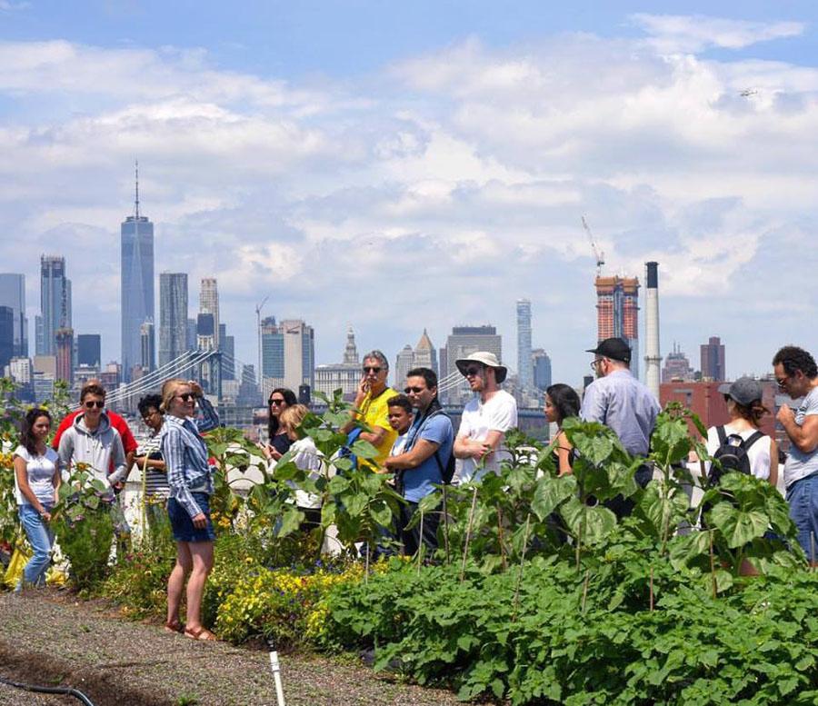 Why Urban Farms May Make Fresh Produce Markets Obsolete