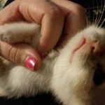 Rogue loved tummy scratches as a kitten