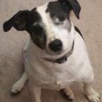 Riley the One Eyed Wonder Dog