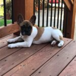 Winslow lounging on the deck