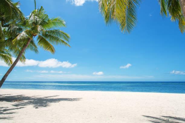 Tropical Paradise Landscape