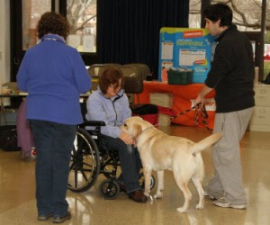 Therapy Dog Testing- small