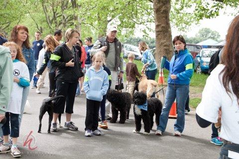Previous Dog Walk