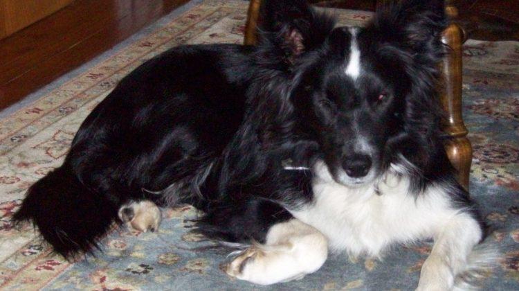 Casey the Blind Wonder Dog (Part 1)