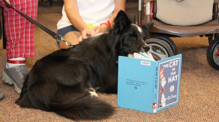 Casey the Blind Wonder Dog (Part 2)