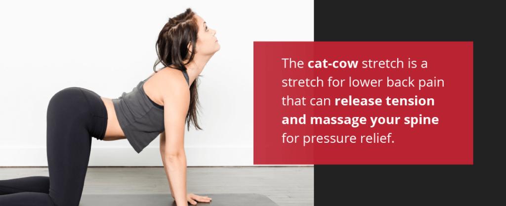 Cat Cow Stretch