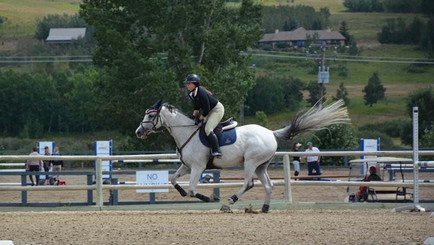 Lease horse Saga (Cassiya)