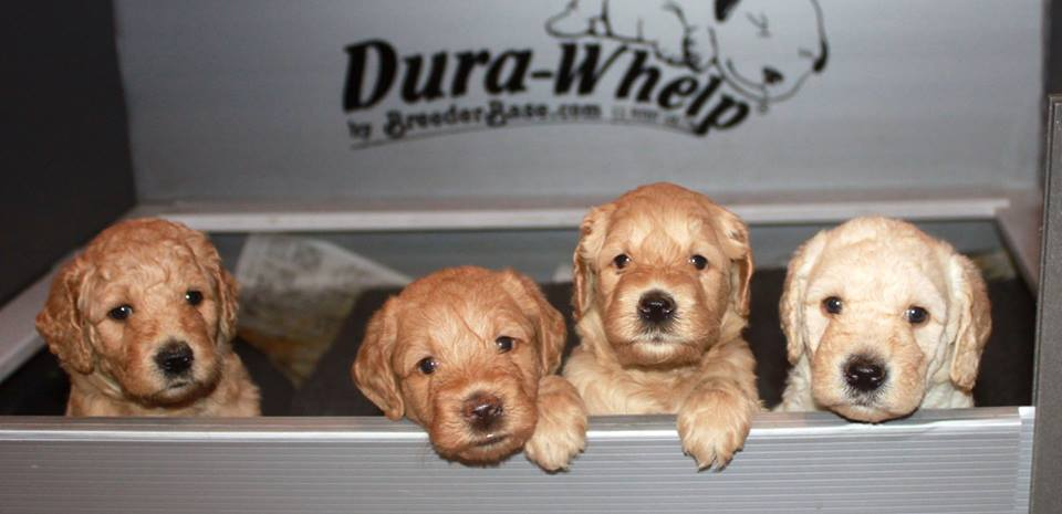 Some of Coral and Finley's pups!