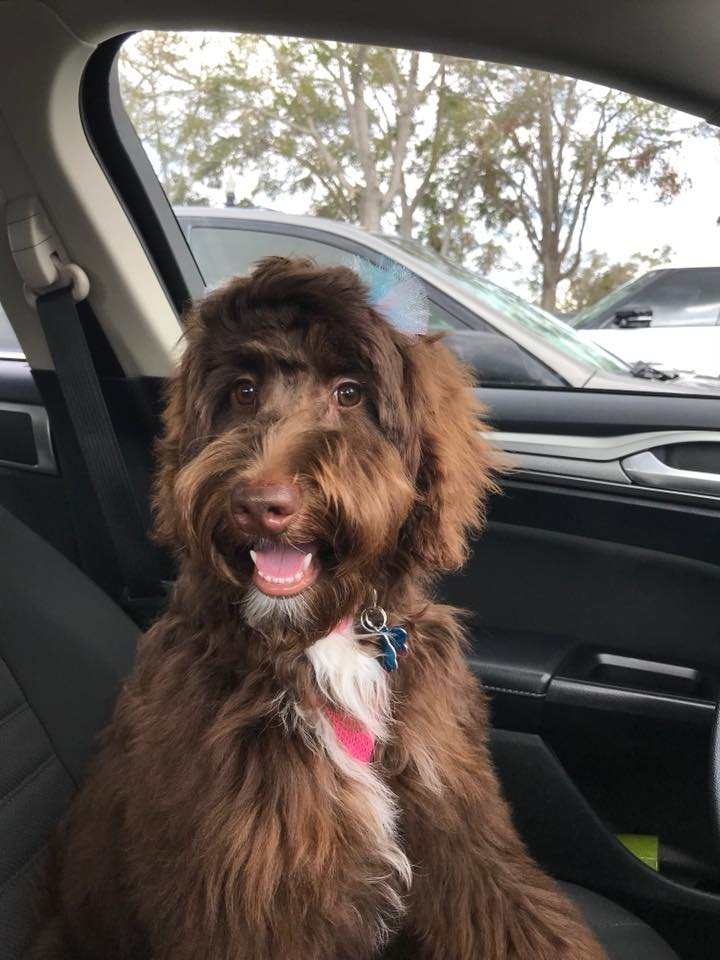Miss Avery on a car ride.
