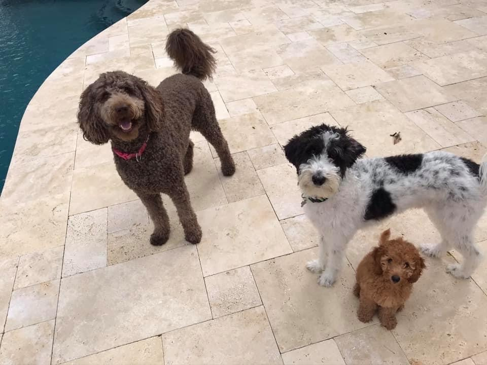 Kona G. with Fletcher and Cove M. from three different litters!