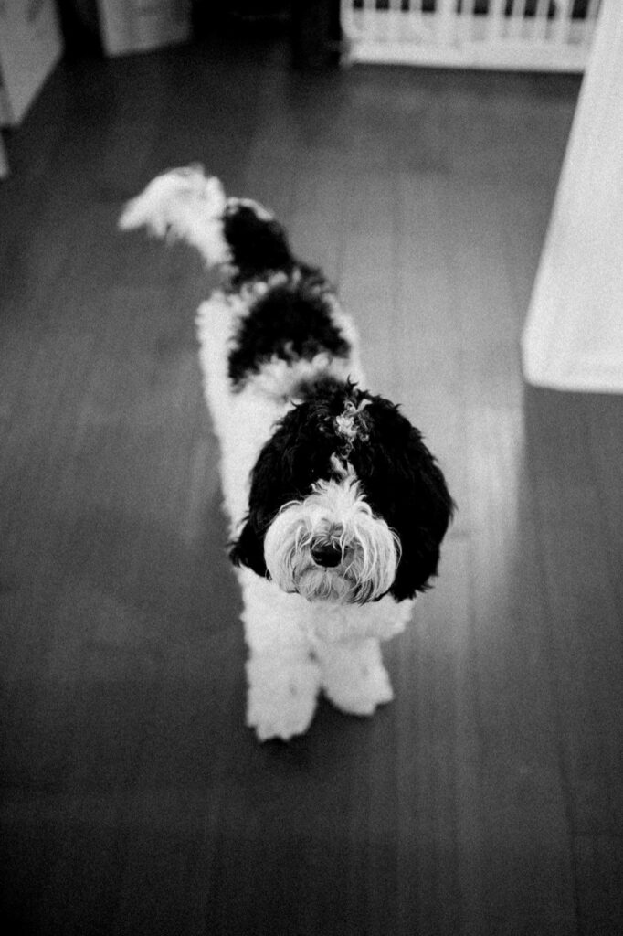Lexi K. posing for a pawfect black and white.