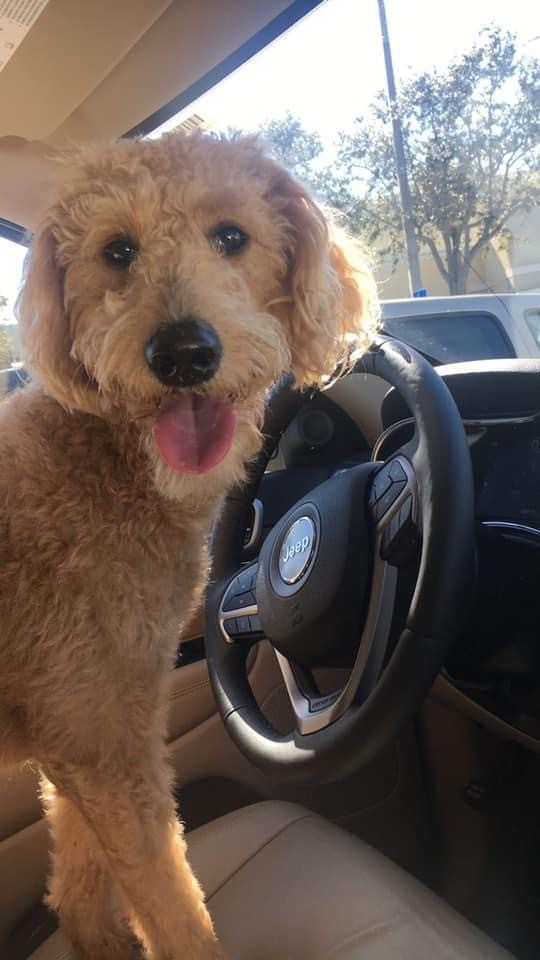 Rosie S. practicing for her drivers license!