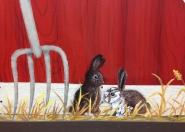 Animals bunnies