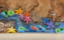Tide pools critters