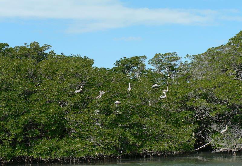 Islamorada Island Tour