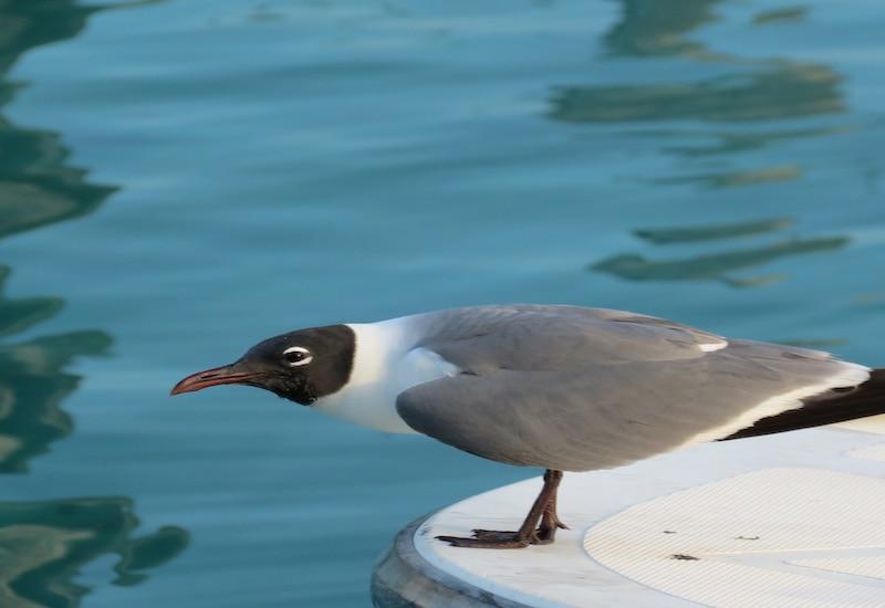 Ecology Boat Tour Islamorada
