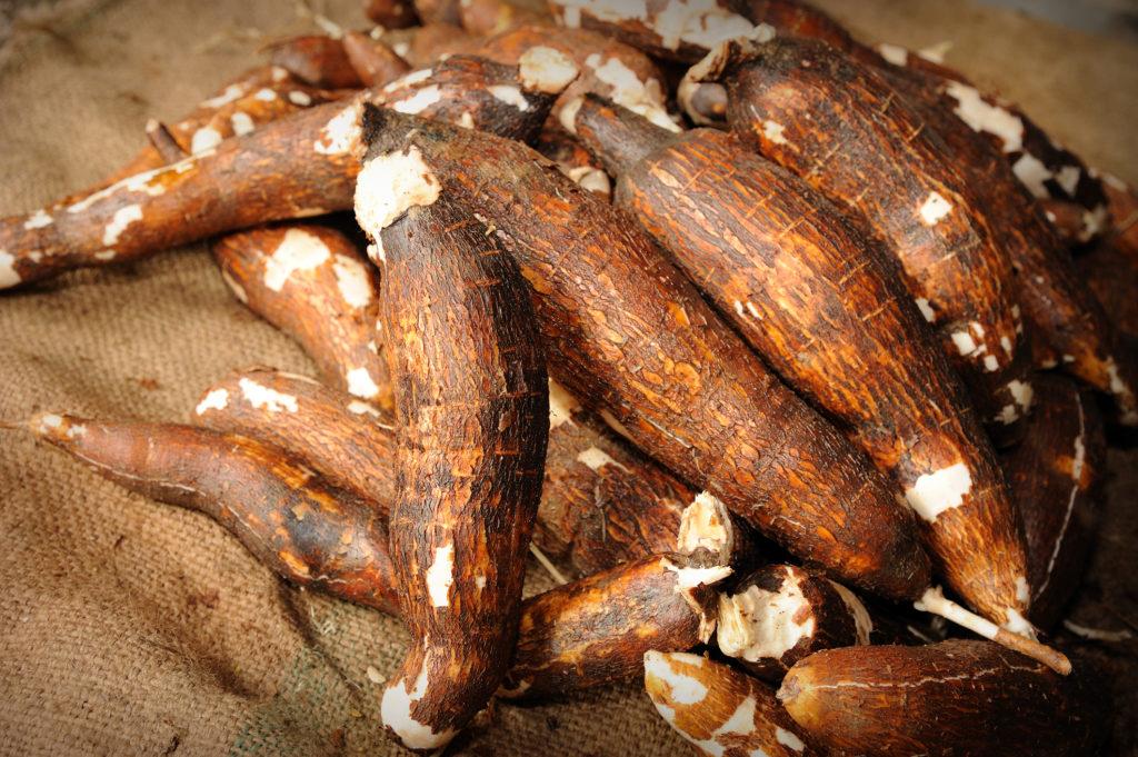 Fresh tapioca-yuca-cassava-manioc