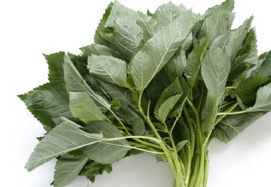 jute mallow leaves