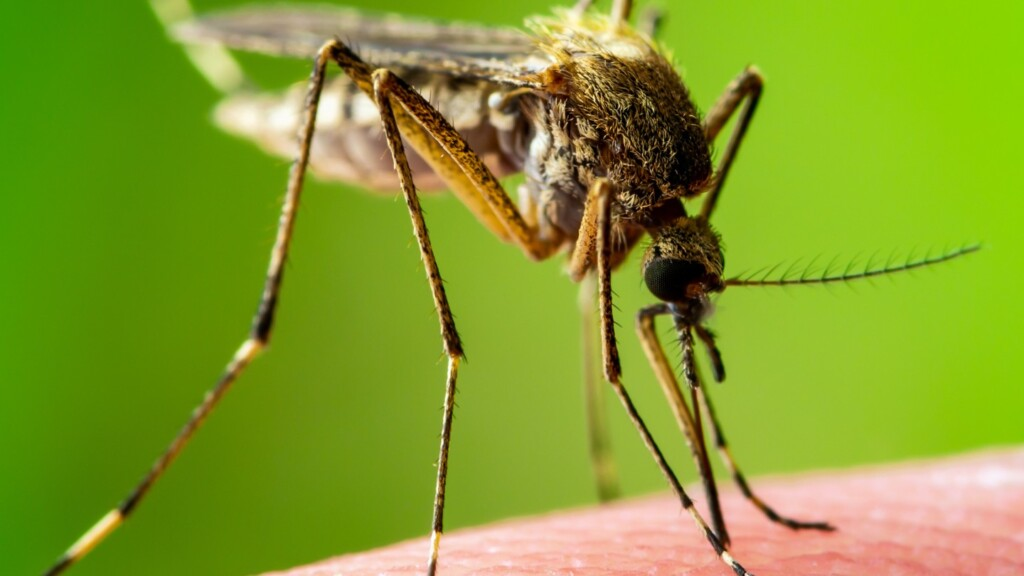 This image has an empty alt attribute; its file name is mosquito-2_0-1024x576.jpeg