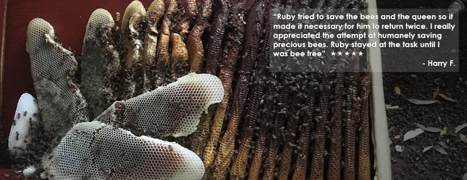 bee hive with testimonial text