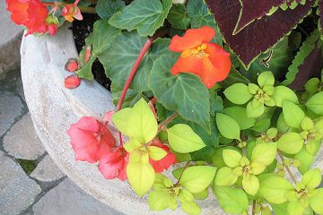 Container & Specialty Gardening
