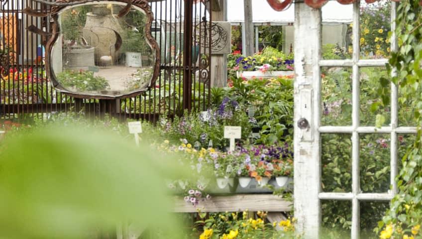 Calgo Gardens
