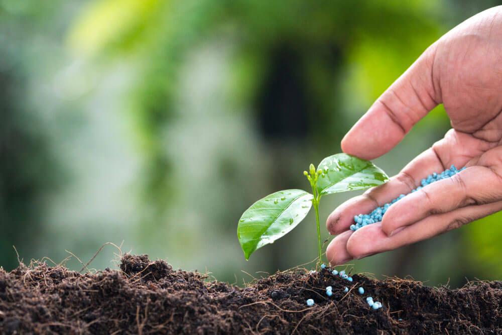 Hand putting fertilizer seeds on a plant