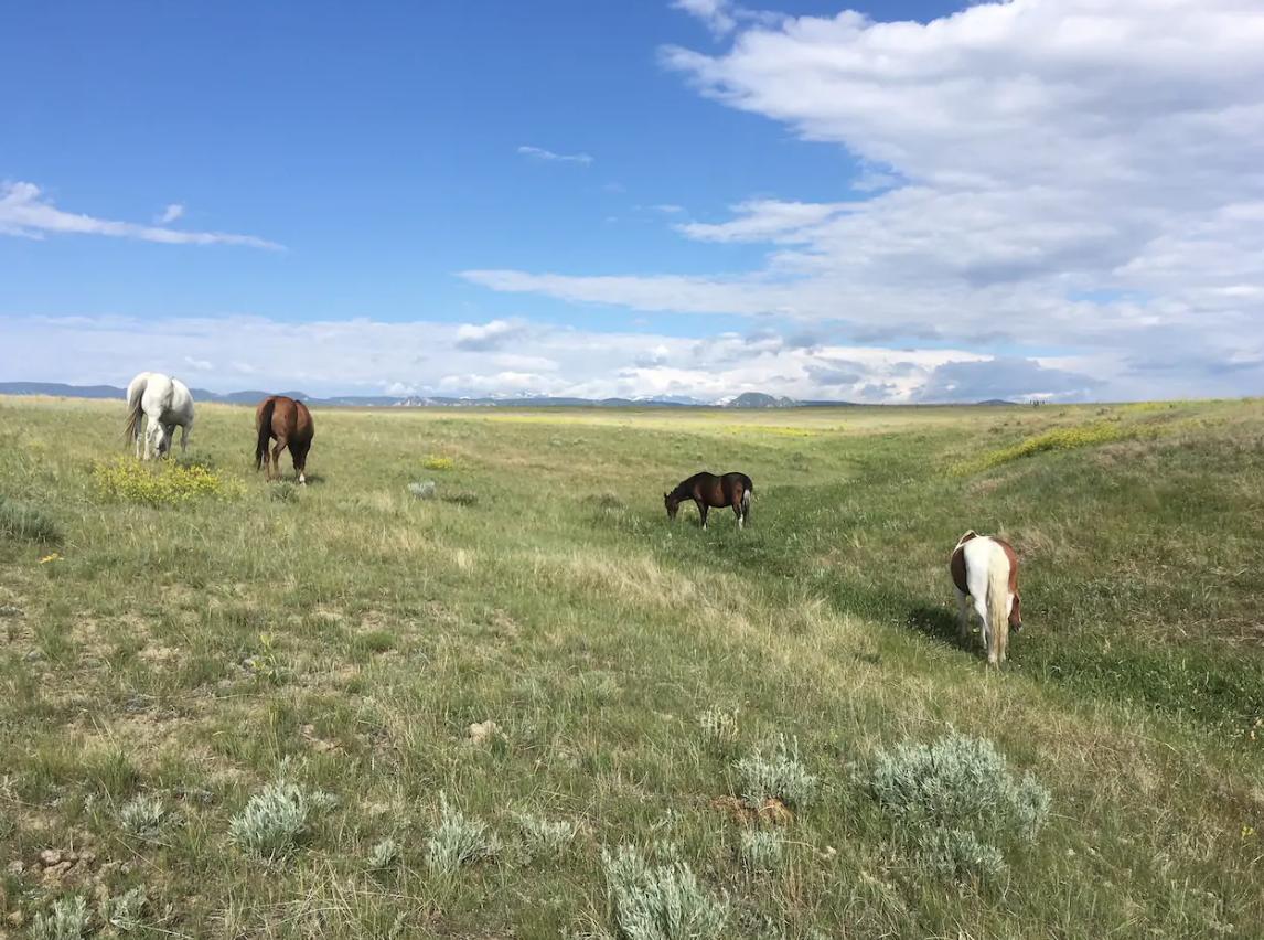 best-horse-boarding-buffalo-wy