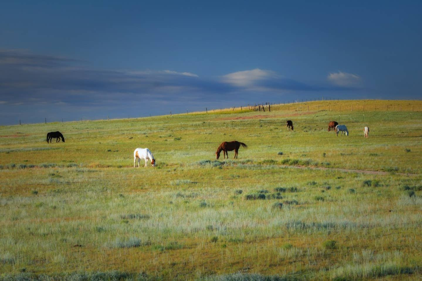 rustic-loding-horses-buffalo-wy