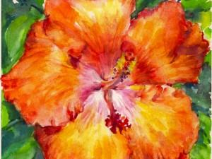 Hibiscus Orange Popsicle