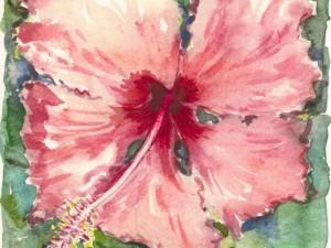 Hibiscus Rose Frou Frou