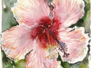 Hibiscus Rose Multicolor